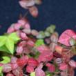 ◆ 鉢植えも秋