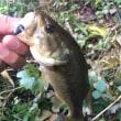 9月18日 海の釣りが無理なら…野池にGO!