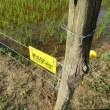 電気柵(ソーラパネル)設置とヤマボウシ