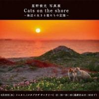 Cats on the shore~海辺に生きる猫たちの記憶~ 星野俊光写真展 2013.8.19~8.29