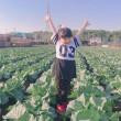 キャベツ収穫体験の御案内