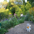 秋の花々が咲き乱れる「ガーデンミュージアム比叡」。
