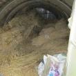 9月20日・農園の恒例行事ワラ取りをしました!
