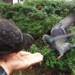 手に乗る鳩と文鳥(^^♪