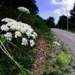 裏山へ雑草の花を探しに行く