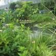 モネの睡蓮ふう デパートの屋上庭園