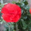 久々に作った寄せ植えと今日の花