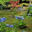 山科の勧修寺は夏の装い