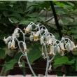 京都府立植物園 ・・・ ⑧
