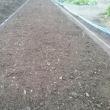 ジャガイモ用の畝立しました。