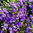 『季節の花』 諸喝采