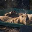 ☆寒い日はお風呂に限りまっな〜横浜市立金沢動物園〜