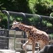 撮影@多摩動物園