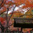 万博記念公園・大阪府・寒かった。 17・11.19日