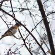1月18日 ニホンリスと野鳥
