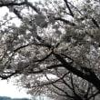 今年の『気まぐれ会』の花見は府中郷土の森!