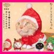猫のガチャシリーズ『かわいい かわいい ねこクリスマスちゃん』やってみた