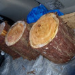 檜の短コロ