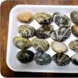 貝の模様の不思議と一日の予定