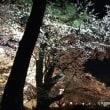 弘前夜桜2018