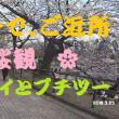 セローで、ご近所 桜見 プチツー 🌸 ^^! ブログ&動画