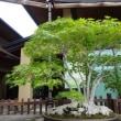大宮盆栽美術館(埼玉県さいたま市)