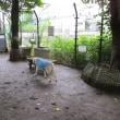今日は雷雨です~☆