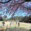 満開の河津桜~~♪