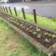 地区花壇植え替え終了…