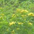伊吹山の花々 ・・・ 滋賀県米原市