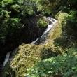 布引の滝(ヨシ)