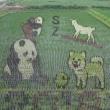 救助犬試験
