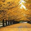昭和記念公園【東京都立川市】