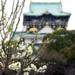 ここの梅林は3~5部咲きでした!・・・大阪城公園