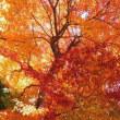 紅葉もそろそろ・・・