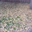 秋も深まり、いつもの場所で。