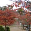 秋の日のぽん散歩♪