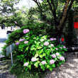 紫陽花寺、奈良の矢田寺