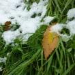 紅葉 のち 初雪
