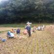 「おだっけこ米」の脱穀作業