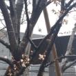 冬に逆戻りした「春分の日」