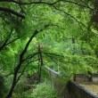 会期以外も連絡してくださいとのブログをご覧になって、岸和田市の若いカップルが訪ねてくれました(4月25日)