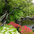 雨の鎌倉 長谷寺