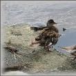 川辺に咲く花と 何時もの鳥たち