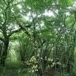 植物観察)箱根