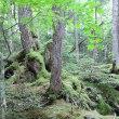 白駒の池 苔の森へ