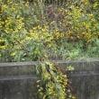 用水に垂れる花