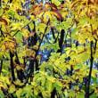 鞍掛山の黄葉