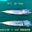 笑転爺の釣行記 5月20日☀ 浦賀港岸壁