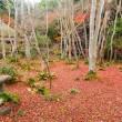 祇王寺の散り紅葉 ・・・ 京都市